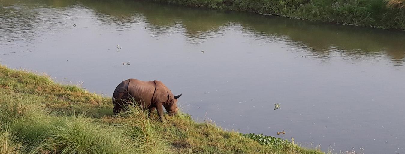 Bardia Wildlife Tour